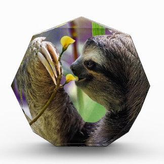 Three-Toed Tree Sloth Acrylic Award