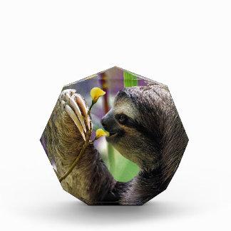 Three-Toed Tree Sloth Award