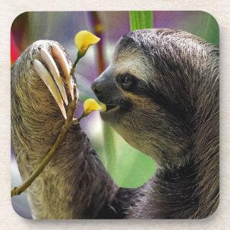 Three-Toed Tree Sloth Beverage Coaster