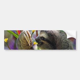 Three-Toed Tree Sloth Bumper Sticker
