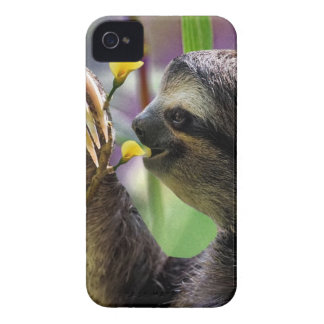 Three-Toed Tree Sloth Case-Mate iPhone 4 Case