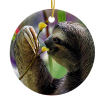 Three-Toed Tree Sloth Ceramic Ornament