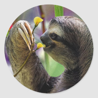 Three-Toed Tree Sloth Classic Round Sticker