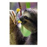Three-Toed Tree Sloth Custom Stationery