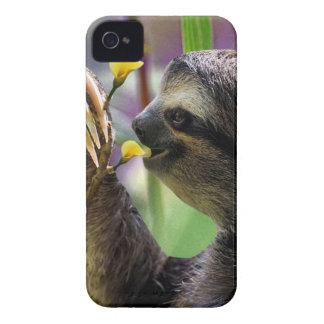 Three-Toed Tree Sloth iPhone 4 Case-Mate Case