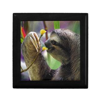 Three-Toed Tree Sloth Keepsake Box