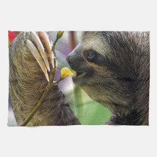 Three-Toed Tree Sloth Kitchen Towels