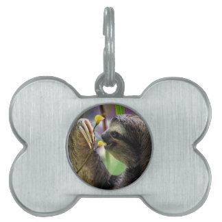 Three-Toed Tree Sloth Pet Name Tag
