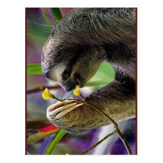 Three-Toed Tree Sloth Postcard