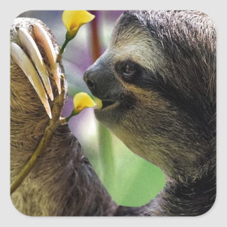 Three-Toed Tree Sloth Square Sticker