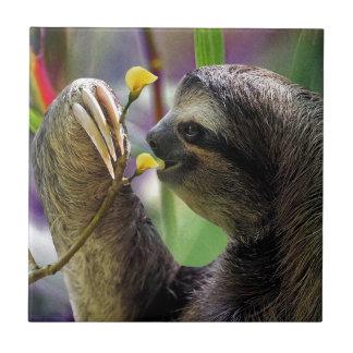 Three-Toed Tree Sloth Tile