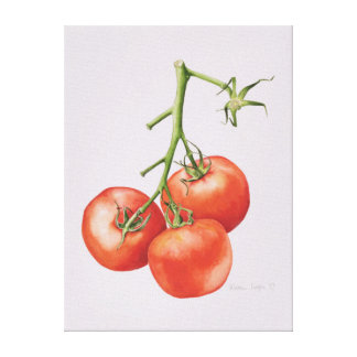 Three Tomatoes on the Vine 1997 Canvas Print