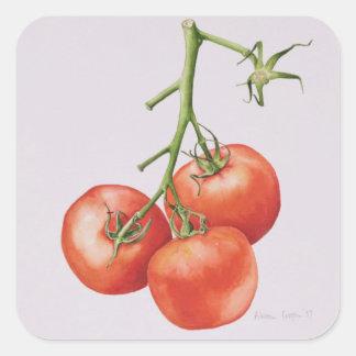 Three Tomatoes on the Vine 1997 Square Sticker