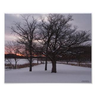Three Trees at Sunset Photo Print