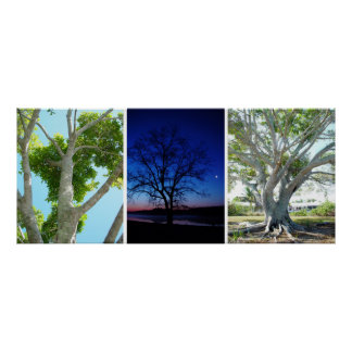Three trees photographs on one Poster