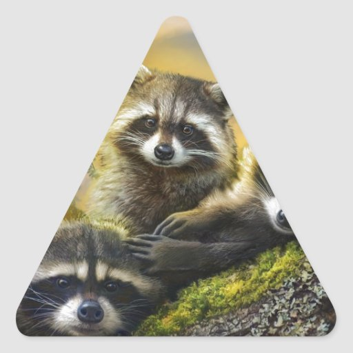 three very cute young raccoons with bird triangle sticker