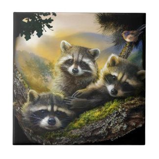 three very cute young raccoons with bird tile