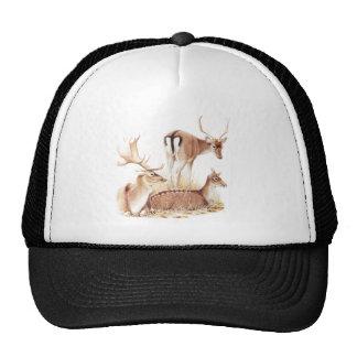 Three Vintage Deer On White Trucker Hat
