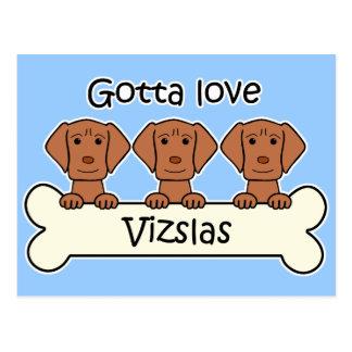 Three Vizslas Postcard