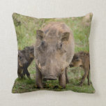 Three Warthog Piglets Suckle On Their Mother Throw Pillows