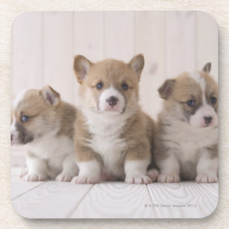 Three Welsh Corgi Coaster