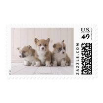 Three Welsh Corgi Postage