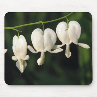 three white bleeding heart flowers mouse pad