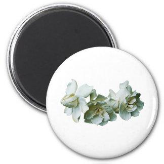 Three White Camelias Magnet