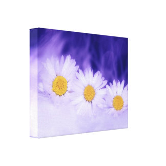 THREE WHITE DAISIES FLOWERS BACKGROUNDS WALLPAPERS CANVAS PRINT