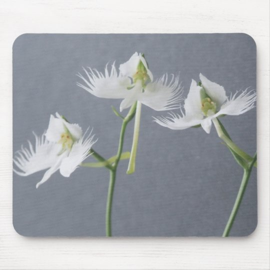 Three White Egret Orchids Mouse Pad