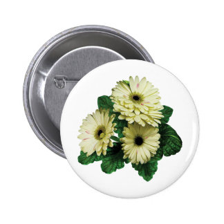 Three White Gerbera Daisies Pinback Button
