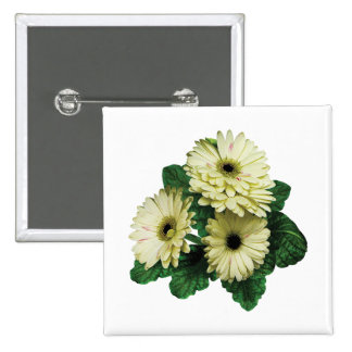 Three White Gerbera Daisies Pinback Buttons
