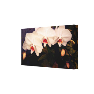 Three White Orchids Canvas Print