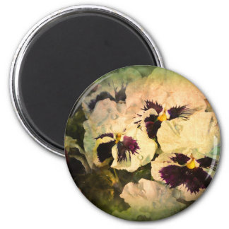 Three White Pansies (textured) Refrigerator Magnets
