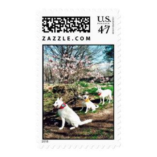 Three White Shepherds Postage