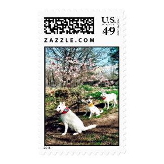 Three White Shepherds Stamp