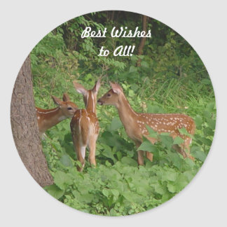 Three White Spotted Baby Deer Best Wishes Classic Round Sticker