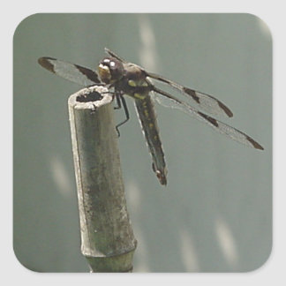 Three Winged Dragonfly Square Sticker