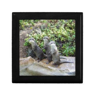 Three Wise Otters, Jewelry Box