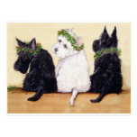Three Wise Terriers Postcard