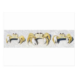 Three Yellow Fiddler Crabs.jpg Postcard