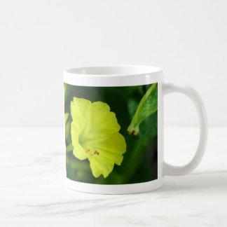 Three Yellow Four O'Clocks Coffee Mugs