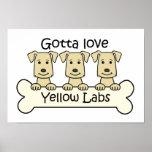 Three Yellow Labs Poster