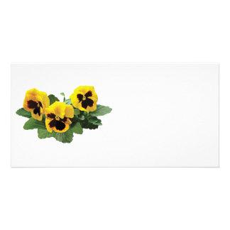 Three Yellow Pansies Photo Card