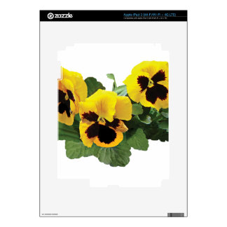Three Yellow Pansies Skins For iPad 3