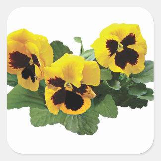 Three Yellow Pansies Square Sticker