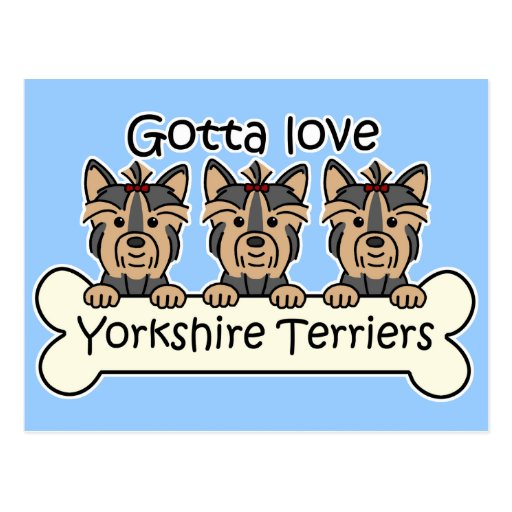Three Yorkshire Terriers Post Card
