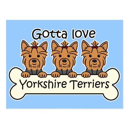 Three Yorkshire Terriers Postcard