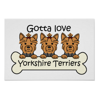 Three Yorkshire Terriers Poster