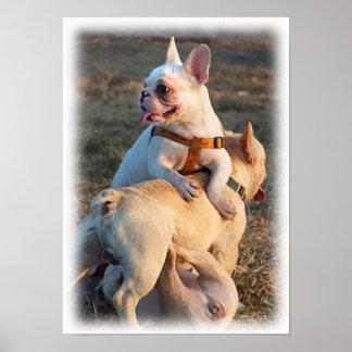 Three Young Bulldogs are Having Fun Wrestling! Print